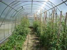 Теплица из поликарбоната Урожай